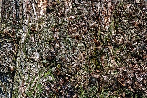 Bark, Nature, Wood, Background, Tree