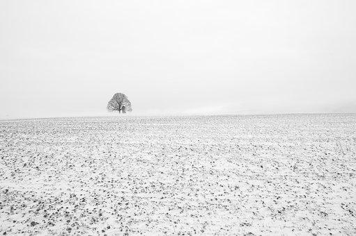 Tree, Black And White, Fog, Field, Alone