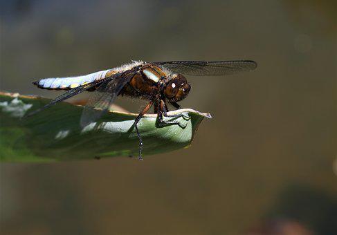 Insect, Nature, Wildlife, Fly, Animal