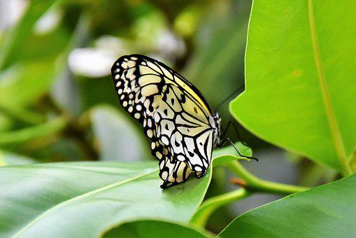 Butterfly, Insect, Wing, Nature, Close, Fly