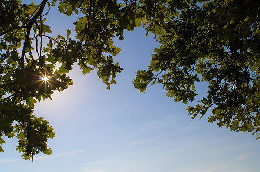 Sky, Trees, Leaves, Branches