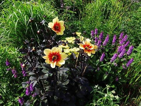 Art Garden, Flower Bed, Spring, Blütenmeer, Flowers