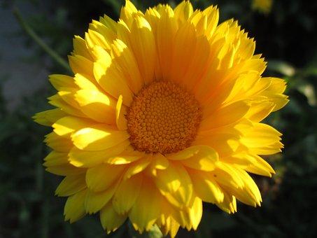 Nature, Flower, Plant, Summer, Leaf, Flowers, Garden