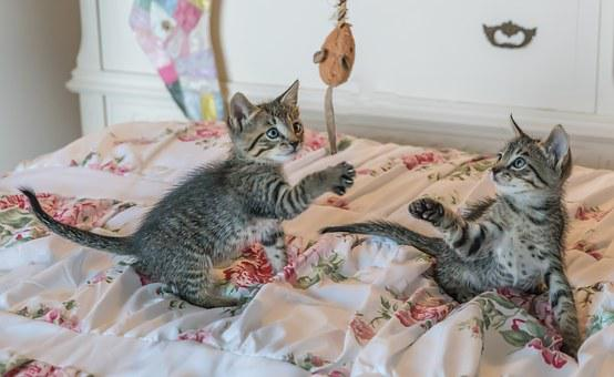 Kittens, Cats, Foster, Playing, Cute, Pet, Adorable