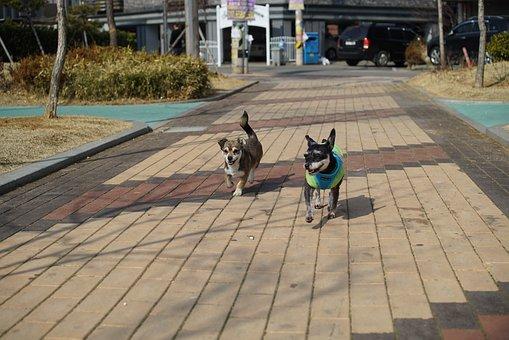 Puppy, Dog, Animal, Stare, Pm, Consensus, Walk, Park