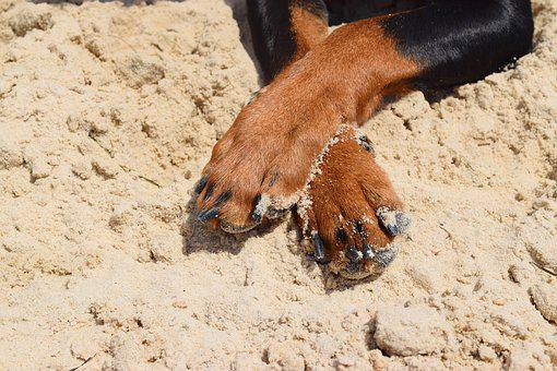 Dog, Pinscher, Paws, Pets, Pet, Animal