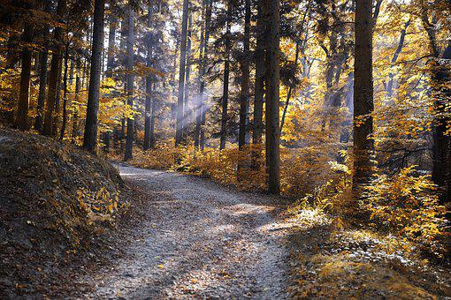 Autumn, Forest, Nature, Colorful Autumn Forest, Avar