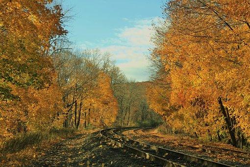 Yellow, Leaves, Autumn, Nature, Fall, Season, Park