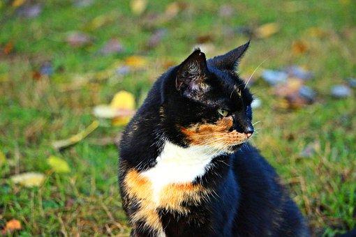 Kitten, Mieze, Cat, Lucky Cat, Domestic Cat