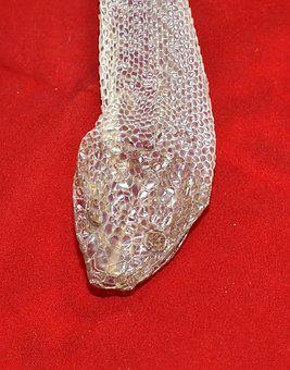 Skin, Snake Skin, Scale, Texture, Close, Reptile