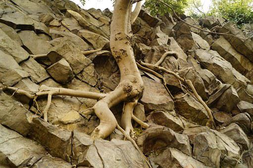 Wood, Root, Roots, Cliff, Nature, It Is Interesting To