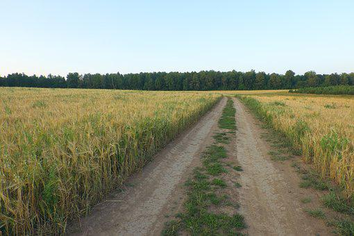 Summer, Field, Road, Landscape, Nature, Yellow