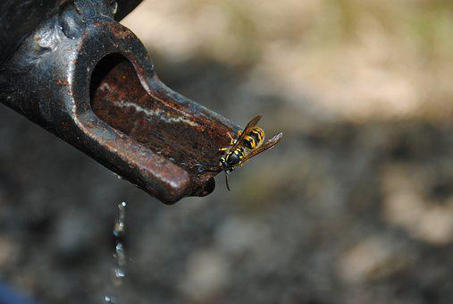 Water, Wasp, Faucet, Nature