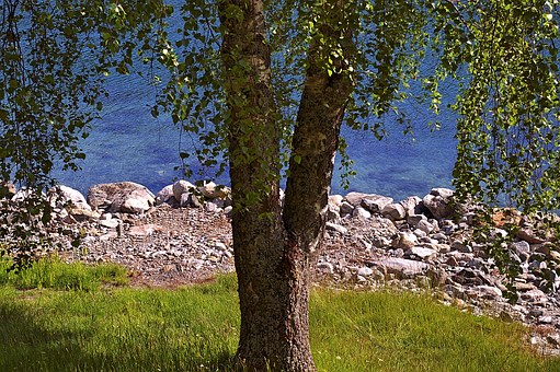 Tree, Deciduous Tree, Nature, Landscape, Summer, Green