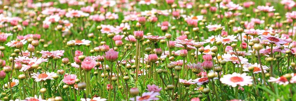 Flower Meadow, Wildflowers, Meadow, Spring, Green
