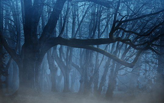 Background, Forest, Fog, Trees, Aesthetic, Light, Weird
