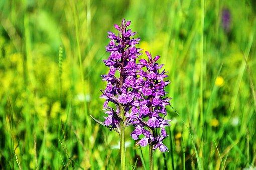 Flower, Nature, Plant, Summer Flower, Beautiful Flower