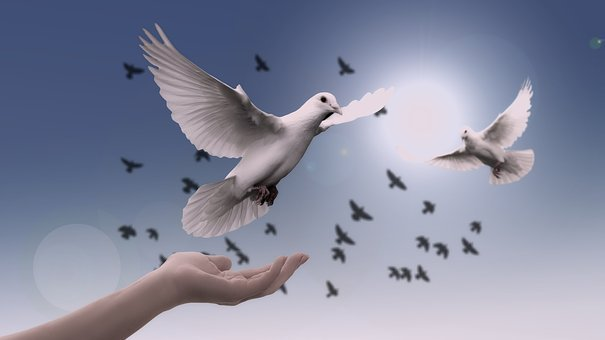 Religion, Faith, Dove, Hand, Trust, God, Pray, Prayer