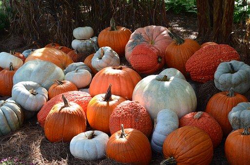 Pumpkins, Fall, Halloween, Decor, Seasonal, Decorations