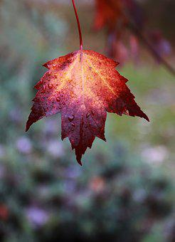 Fall, Leaf, Color, Red, Yellow, Faded, Tree, Autumn