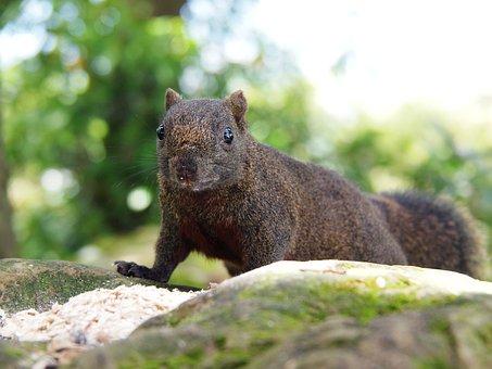 Squirrel, Must Look, Fear, Brown Coffee Color