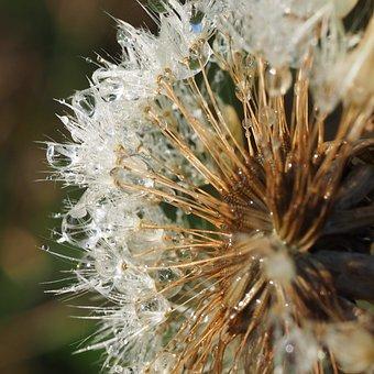 Macro, Dandelion, Dandelions, Fluff, Flower, Nature