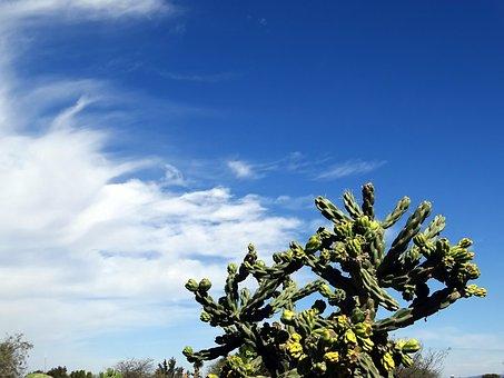 Desert, Cactus, Sky, Thorny, Thorns, Plants