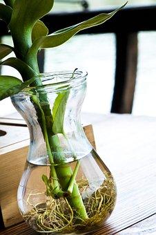 Plant, Green, Green Leaf, Root, Water Bottle, Bottles