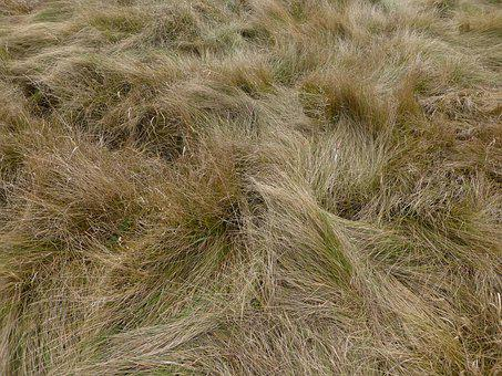 Meadow, Grass, Herb, Texture, Field, Nature, Plants