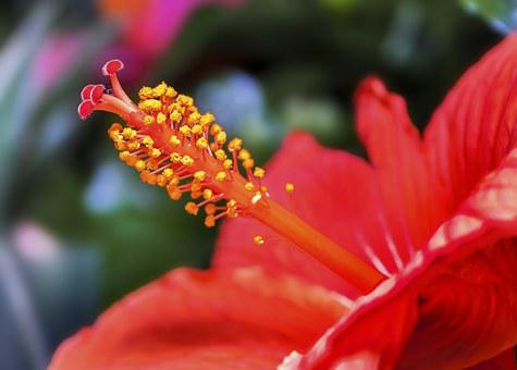 Hibiscus, Blossom, Bloom, Summer, Flower, Mallow, Plant
