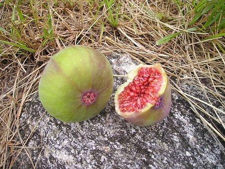 Ficus, Fig, Ficus Carica, Euro Dynasty, Fruit, Sweet