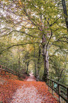 Autumn, Leaves, Trail, Forest, Red, Colors, Yellow