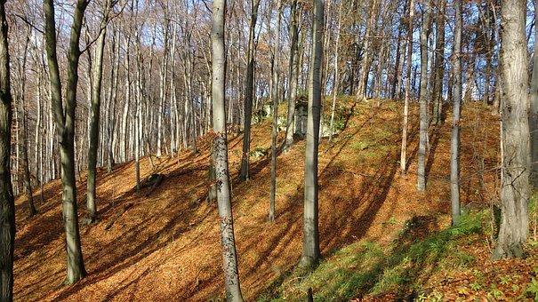 Forest, Autumn, Autumn Gold, Landscape, Nature