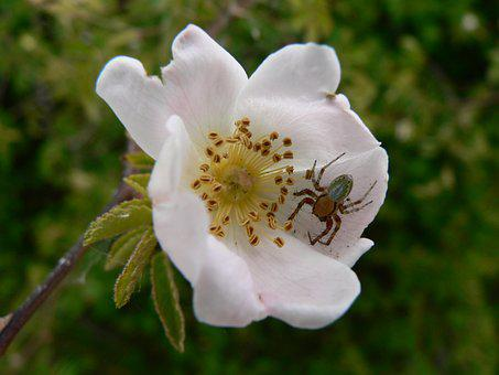 Flower, Spider, Macro, Insects, Arachnid, Nature