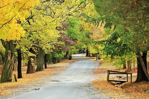 Forest, Avenue, Trees, Autumn, Nature, Landscape