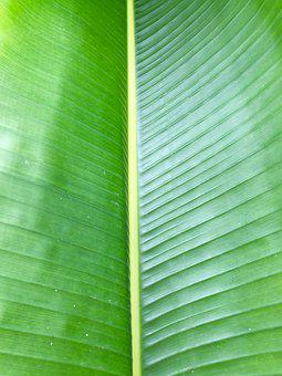 Palm, Palm Frond, Leaf, Green, Frond, Tropical, Botany