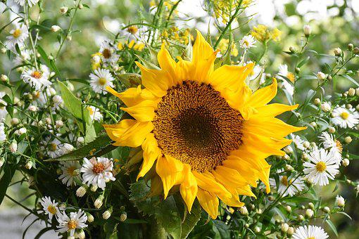 Sunflower, Sun Flower, Yellow, Petal, Petals, Flower