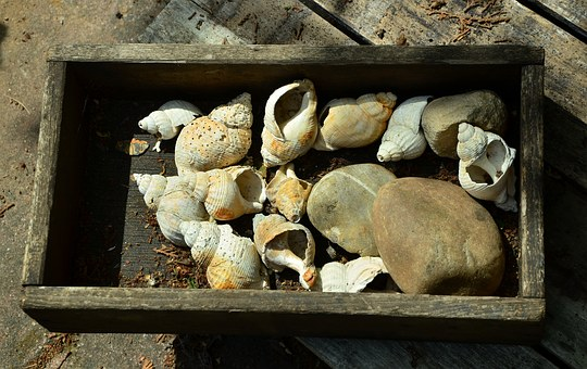 Wooden Box, Old Wood, Box, Lumber, Mussels, Collected