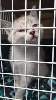 Kitty, Cute, Cat, Cage, Prison, Sad, Lonely
