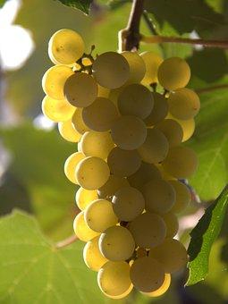 Single, Grapes, Yellow, Fall, Nature, Fruit, Rural