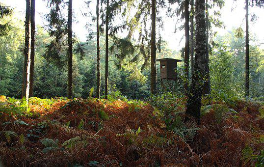 Forest, Trees, Autumn, Autumn Forest, Nature