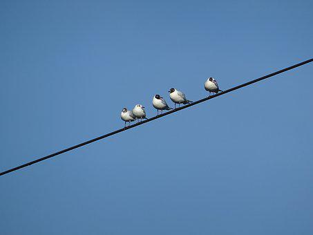 Birds, Power Line, Gull, Sky, Blue, Weather, Clear