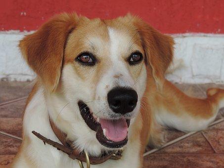 Dog, A, Happy, Canine, Animals, Animal, Pet