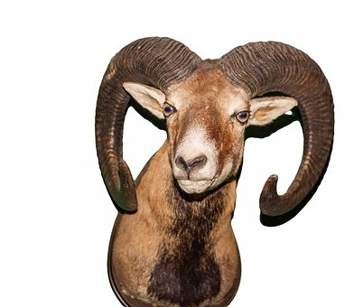 Aries, Animal, Bock, Horns, Ram, Horn, Mammal, Ungulate