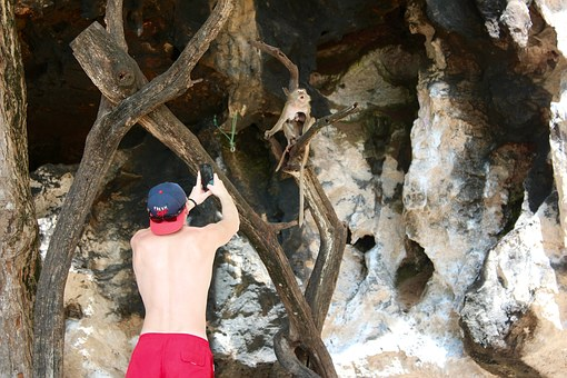 Monkey, Photo, Tourist, Mobile Phone, Camera