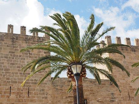 Palm, Palm Fronds, City Gate, Porta Del Moll