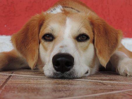 Dog, Pet, Happy, Canine, Animals, Animal