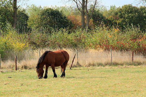 Horse, Cold Blooded Animals, Kaltblut, Pasture, Paddock