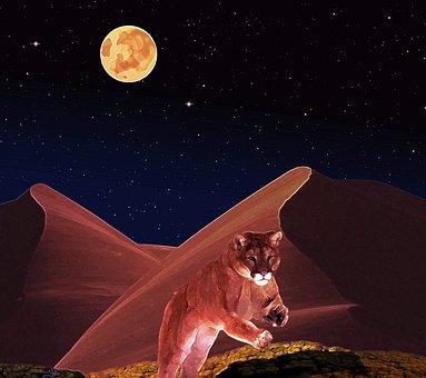 Puma, Predator, Wildcat, Hunt, Fantasy Picture