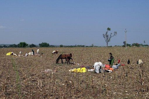Rabadi, Nomads, Tribe, Livestock, Karnataka, India